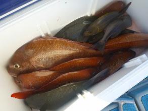 """Photo: 佐賀の""""イノウエさん"""" その2 真鯛、クロ、イサキ・・・でした!"""