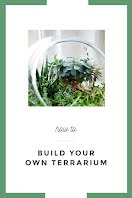 Terrarium How To - Pinterest Pin item