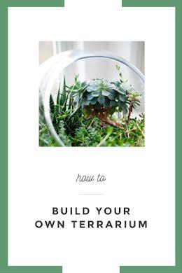 Terrarium How To - Pinterest Pin item