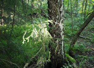Photo: Metsätiellä Päätieltä matkalla Kruunuvuoren lammelle