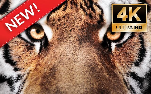 Tiger Wallpapers HD/4K Tiger Themes