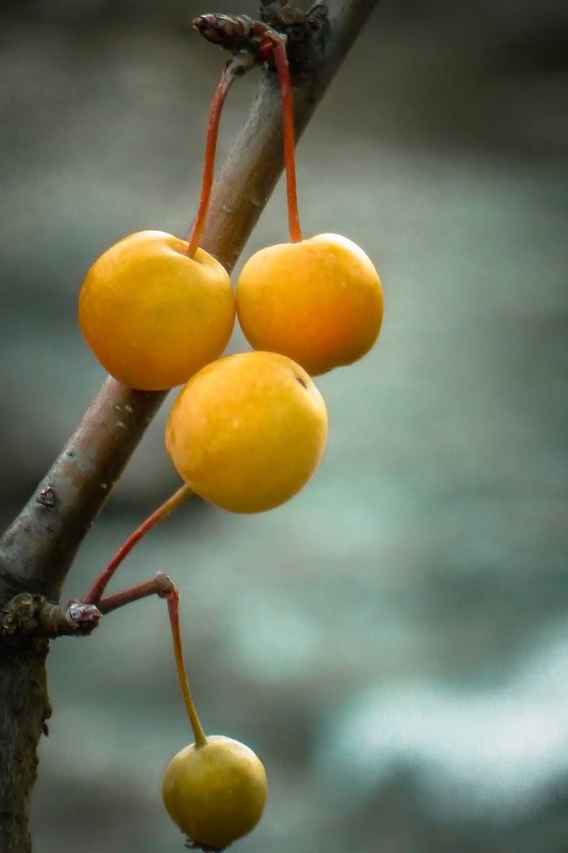 mele selvatiche di AnUseless