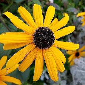 by Abdul Salim - Flowers Flower Gardens