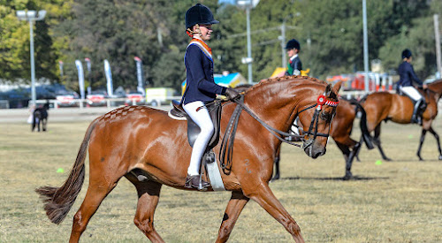 13-year-old local show rider Ella Parish and 12-year-old chestnut gelding Toy will compete at the 2019 Grand Nationals. Photo: Lisa Gordon Photography
