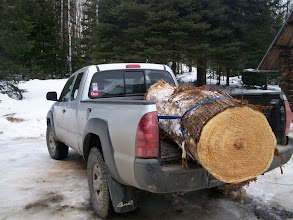 """Photo: Trout totem started as a 33"""" White Cedar log."""
