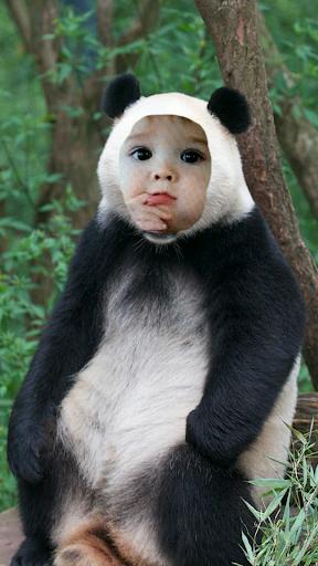 My Panda Camera