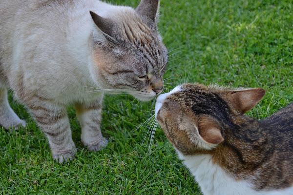 Un dolcissimo bacio d'amor di vb63