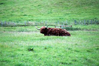 Photo: Highland Cattle!