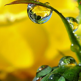 by Helen Beatrice - Nature Up Close Natural Waterdrops