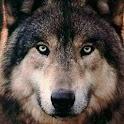 Imágenes de lobos icon