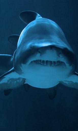 LWP 鯊魚
