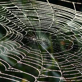 Web Lines by Greg Van Dugteren - Nature Up Close Webs