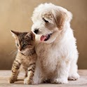 Cute funny puppy & cat photos icon