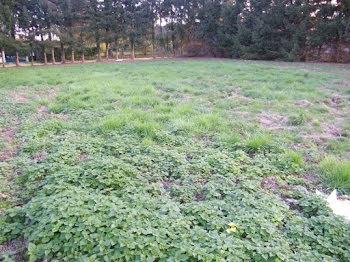 terrain à Illiers-Combray (28)