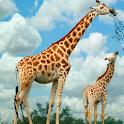 Giraffe live wallpaper icon