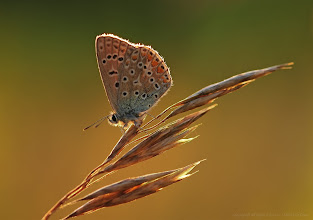 Photo: Happiness is like a butterfly which, when pursued, is always beyond our grasp, but, if you will sit down quietly, may alight upon you. / Nathaniel Hawthorne /  http://lepidoptera-butterflies.blogspot.fr/