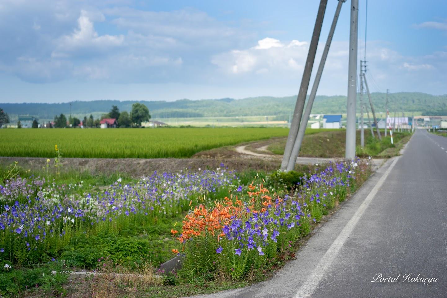 農家の庭先に咲く華やかな花々