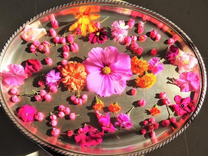 Sfumature di rosa  di lenuccia4