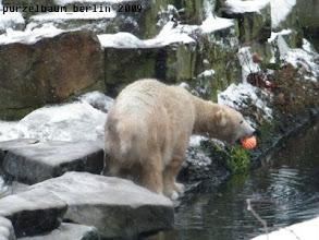 Photo: Knut hat seinen Igelball gefunden :-)