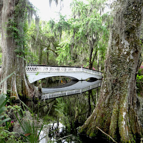 Ashley River in Savannah by Nancy Tubb - Landscapes Waterscapes ( savannah, gardens, bridge, spanish moss, river,  )