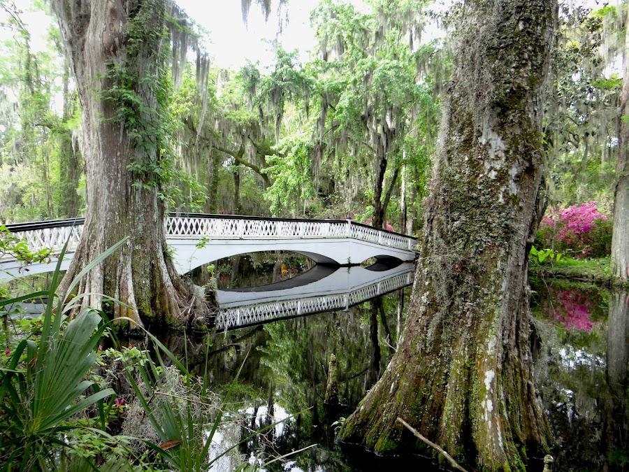 Ashley River in Savannah by Nancy Tubb - Landscapes Waterscapes ( savannah, gardens, bridge, spanish moss, river,  )