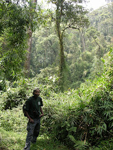 Photo: Deep in the primary forest of Ranomafana with guide, Loret.