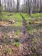 Photo: nice trail