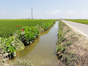 Photo: Floral irrigation ditches