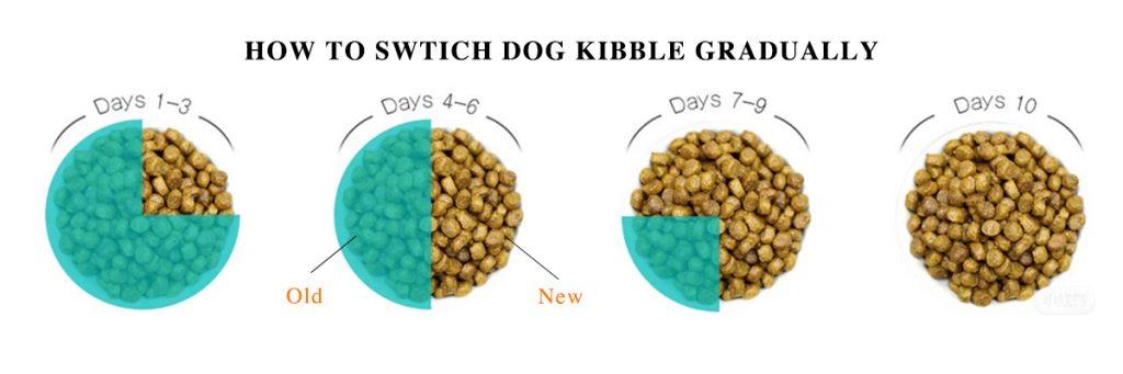 switch dog kiddle