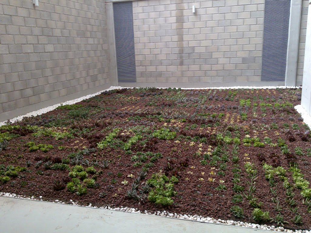 Cubierta vegetal de plantas suculentas