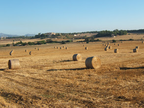 Photo: Feld bei Santa Margalida ( siehe auch www.es-coscois.de )
