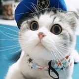 Cat theme-Cute,Adorable,Lazy