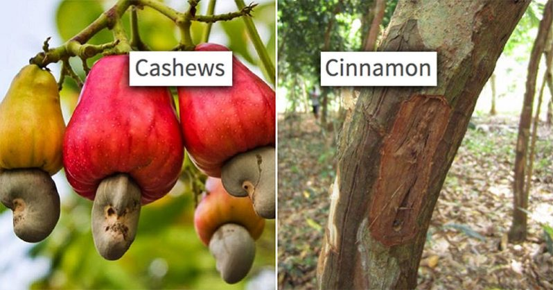 8 Photos That Prove We Have No Idea How Food Grows