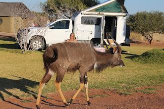 Photo: Ida en haar Kudu