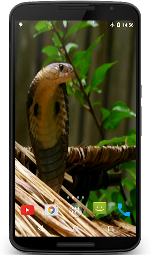 Cobra Video Live Wallpaper