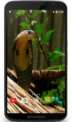 Cobra Video Live Wallpaper - screenshot