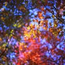 Photo: .   heartbreak station    #cooljapan  #autumnphotography  #紅葉2014  #velvia50  #analogphotography  #filmisnotdead  #autumn2014  #mediumformat  #autumncolors  #filmphotography  #fujifilm