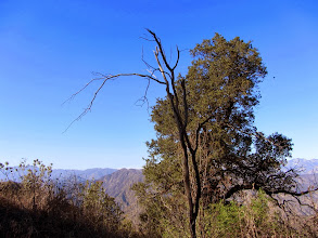 Photo: Vestige of the 2002 Williams Fire, which consumed 37,240 acres