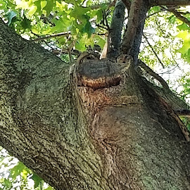 faces in places by Harold Stoler - Nature Up Close Trees & Bushes ( nature, objects, faces, trees )