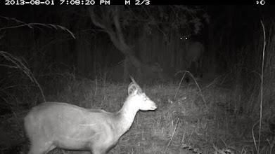 Photo: Male bushbuck and female giant sable Macho de golungo e fêmea de palanca negra gigante
