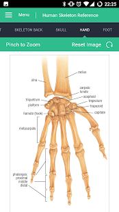 Human Skeleton Reference Guide - náhled