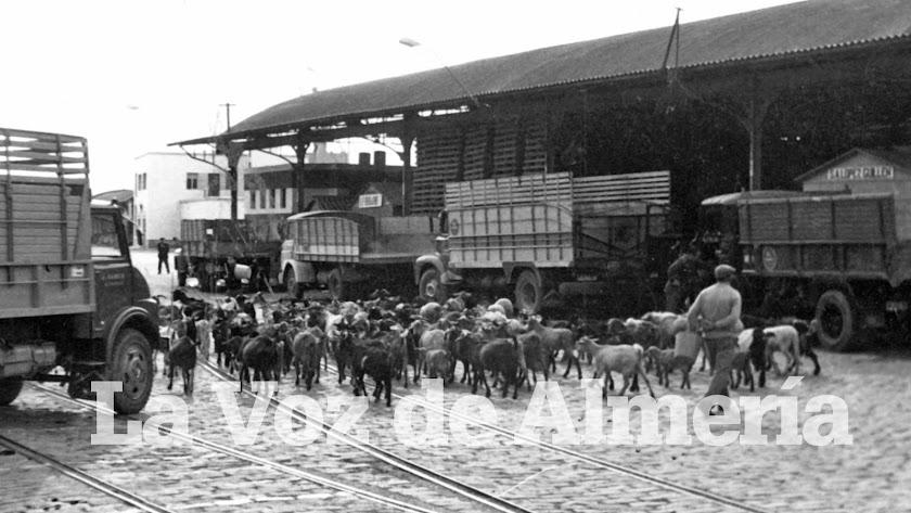 Un rebaño de cabras pasando junto a los tinglados del puerto en un día de faena.