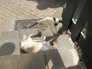 Photo: Kom op joh, ik heb er wel zin in!