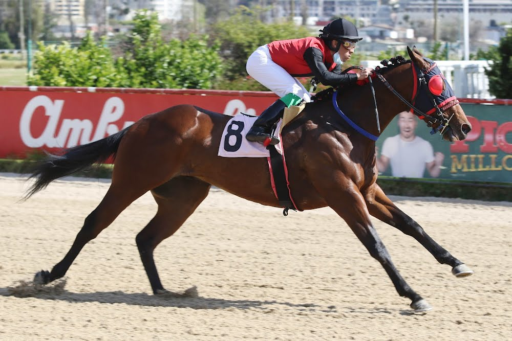 En Viña parte la semana hípica en Chile con una docena de carreras