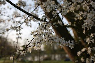 Photo: Day 9 - Some Blossom