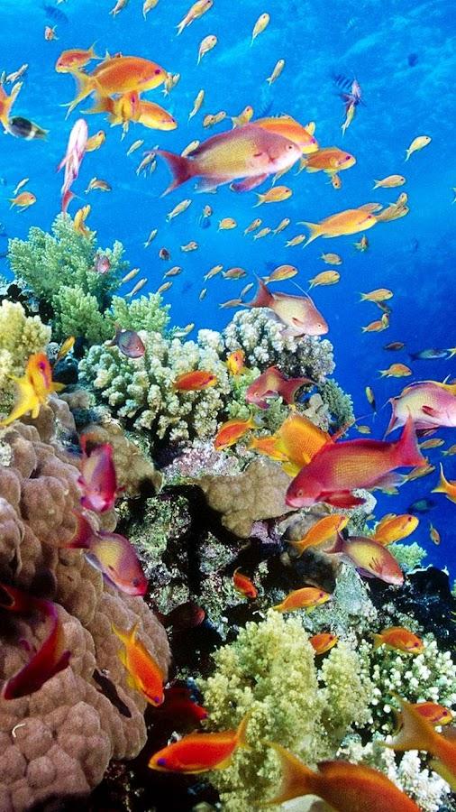 Fondos de pantalla acuario peces en movimiento for Fondo acquario