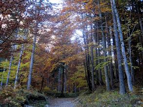Photo: Schöne Herbststimmung am Sackwaldboden.