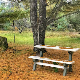 Waiting by Patti Pappas - Artistic Objects Furniture ( needles, pine tree, bench, michigan, falling needles )