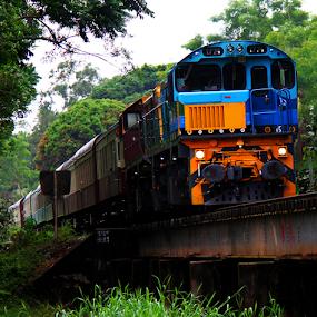 Kuranda Scenic Rail over Freshwater Creek by Peter Keast - Transportation Trains ( railway, railroad, train, tourism, transportation, bridge, scenic,  )