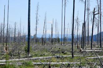 Photo: Deschutes National Forest